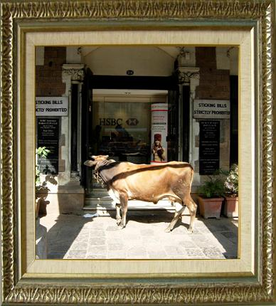 cowshopping.JPG